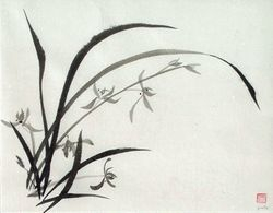 Grass Orchid A