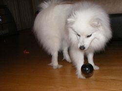 Bouces his own ball