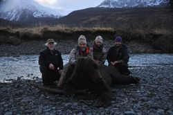 Kodiak brown bear taken by Tony Fornengo