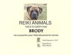 Brody the Reiki Dog