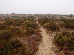 The walk over the sand dunes to the beach near the marina