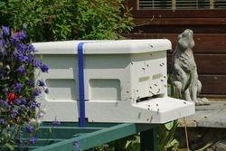 Cream hive ~ next day