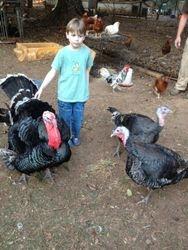 Jonah with his turkeys