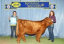 Champion Intermediate Heifer Calf
