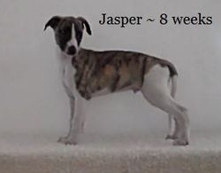 Jasper has gone to his new home