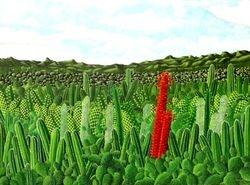 Padang Kaktus, 2008