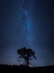 """Milky Way and Oak Tree"" by Linda Rutherford (AW)"