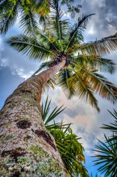 Palm and Clouds