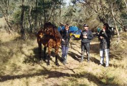 1993 A brumby - Neil Seagrim, Adrian & Paul