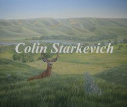 "Rejuvination - Mule Deer (30 by 36"" oil on canvas) In Private Collection"
