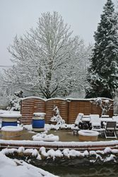 A snowy garden this morning!!