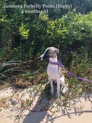 4 months at the beach