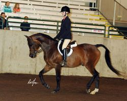 Monique Hader and Shahlero, Youth Purebred Arabian Huntseat