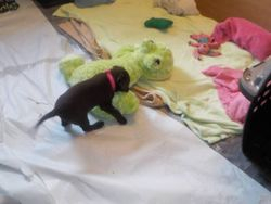 Pink rearranges the frog