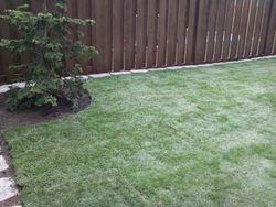 Hillsboro OR lawn installation / lawn installation in Hillsboro, Oregon