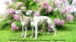 Champions ~ Ziggy and daughter