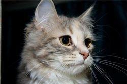 Angelina som kattunge 4 mnd-09