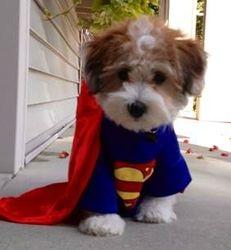 Hank the Superdog