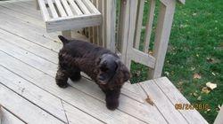 Olivia in a puppy cut