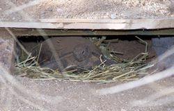 Desert Tortoise Habitatv