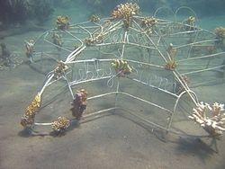47. Starfish