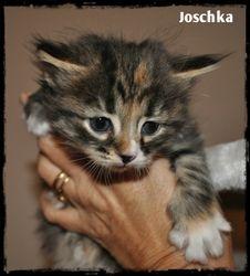 Joschka Eny Surprise SIB f(s) 09 24