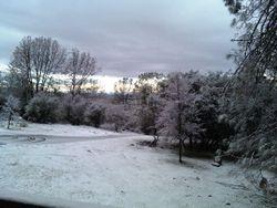 Snow! January 2009