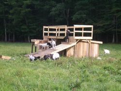 Our Playpen and Shelter
