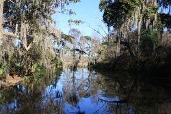 Magnolia Plantation and Gardens, Charleston SC