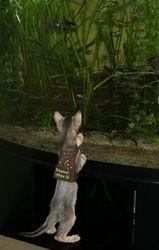 Taiko goes fishing!