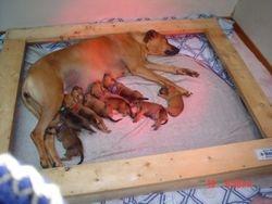 Asha with babies
