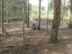 Sandhurst Small Pet Care