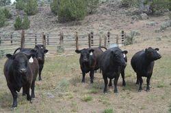 The Heifers