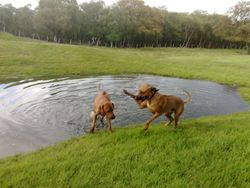 Playing with Baako at the Fort, Bonnybridge