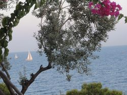 the slow gentle rythm of the yachts and boats sailing past