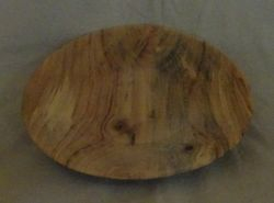 Ambrosia Maple #1856