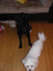 Dakota and Bella