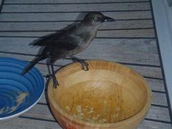 A cheeky bird pinching our crisps