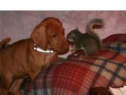 Belle and Earl the squirrel!