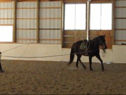 Trot Right on lunge