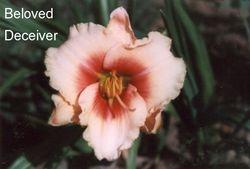 BELOVED DECEIVER  $8