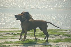 Asha and Akala