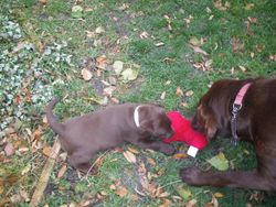 Grace and Ginger and the red bone toy