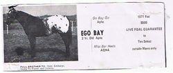 Ego Bay
