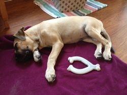 Penny on a lazy Sunday!