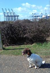 Day out at Felixstowe