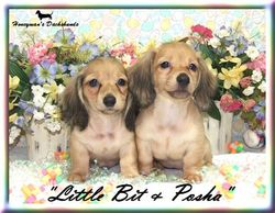 Little Bit & Pasha