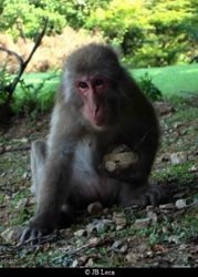 cuddle (Arashiyama)
