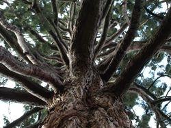 Up the tree!