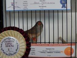 Champion Open Hen
